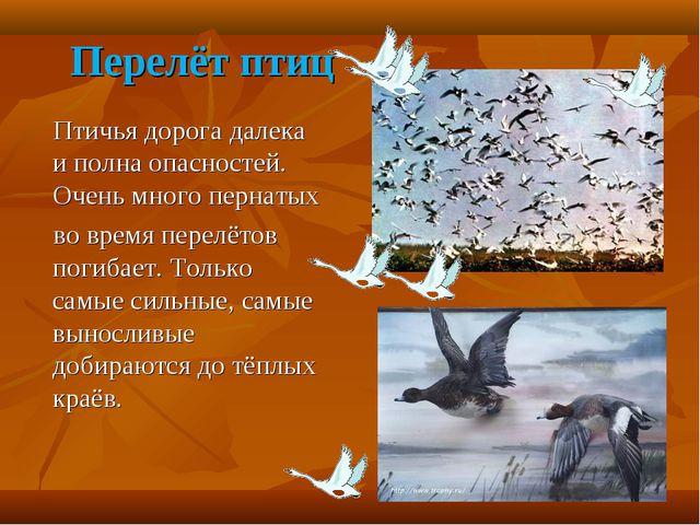Перелёт птиц Птичья дорога далека и полна опасностей. Очень много пернатых во...