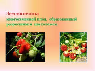 Земляничина многосеменной плод, образованный разросшимся цветоложем