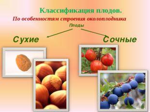 Классификация плодов. По особенностям строения околоплодника Плоды Сухие Сочные