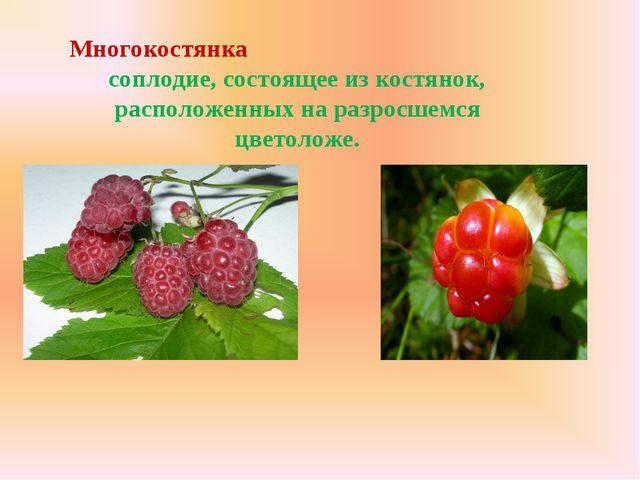 Многокостянка соплодие, состоящее из костянок, расположенных на разросшемся ц...