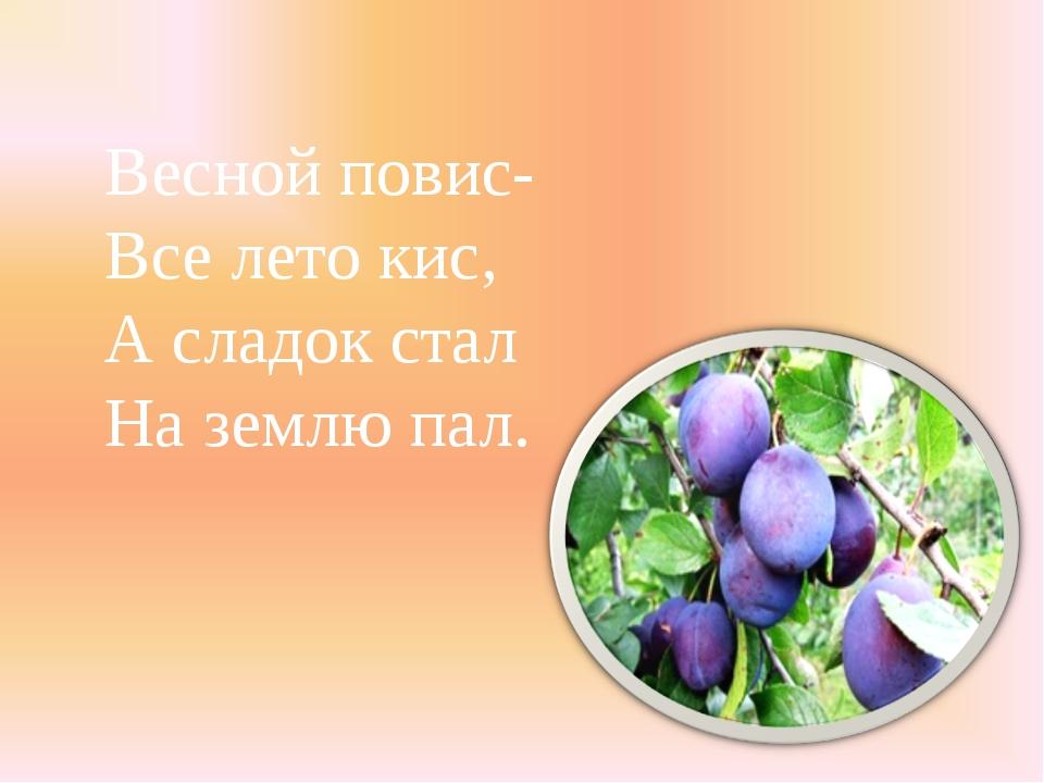 Весной повис- Все лето кис, А сладок стал На землю пал.