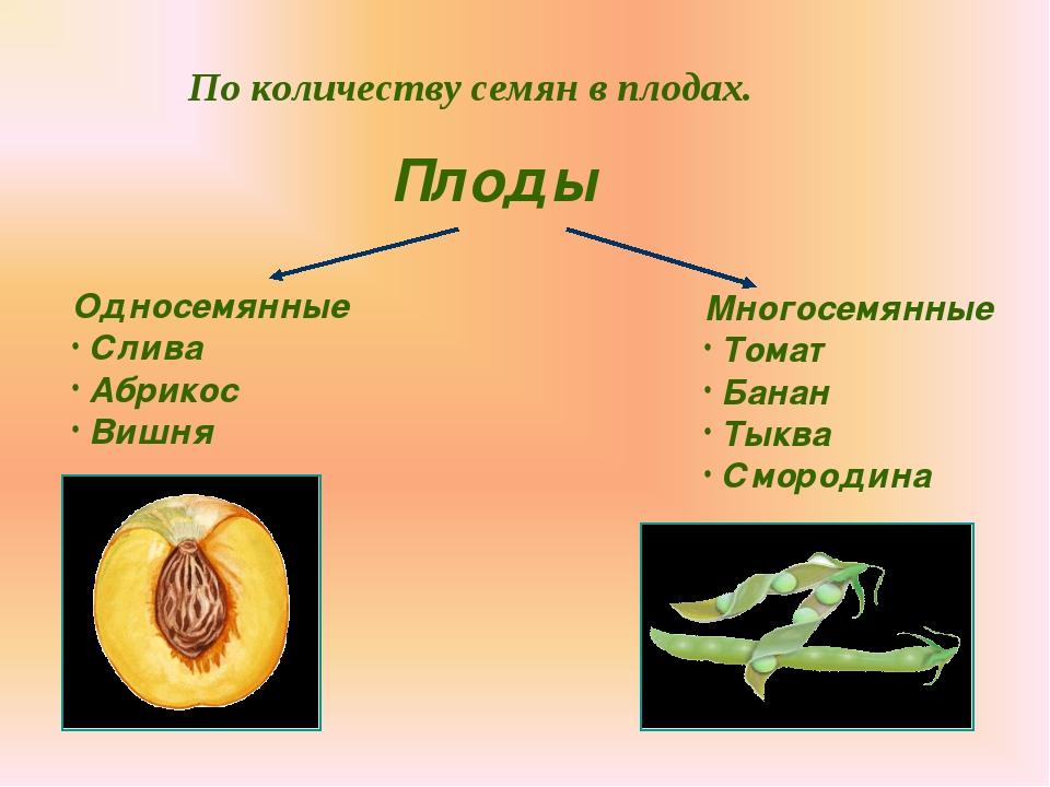 По количеству семян в плодах. Плоды Односемянные Слива Абрикос Вишня Многосем...