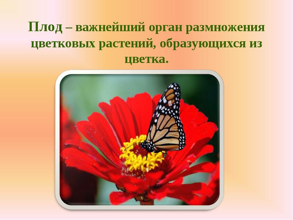 Плод – важнейший орган размножения цветковых растений, образующихся из цветка.