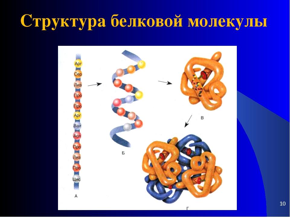 * Структура белковой молекулы