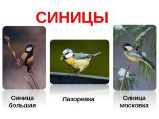 СИНИЦЫ Синица большая Синица московка Лазоревка