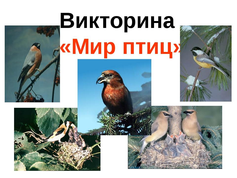викторина о птицах картинка покупали, шпаклевки