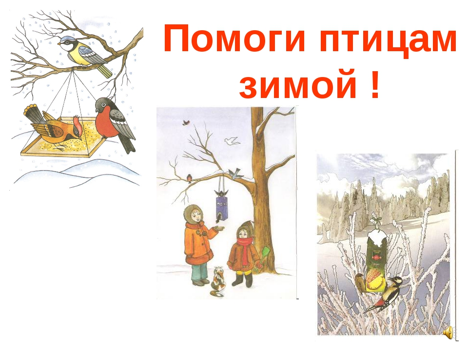 Помоги птицам зимой !