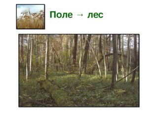 Поле → лес