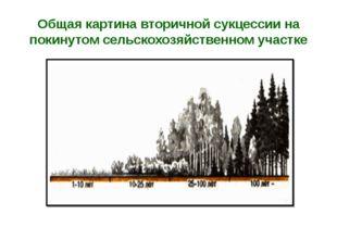 Общая картина вторичной сукцессии на покинутом сельскохозяйственном участке