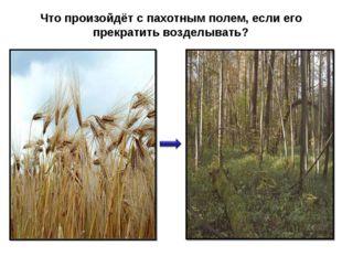 Что произойдёт с пахотным полем, если его прекратить возделывать?