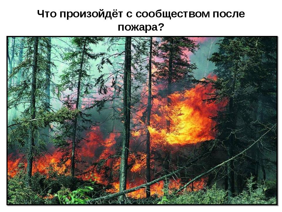 Что произойдёт с сообществом после пожара?
