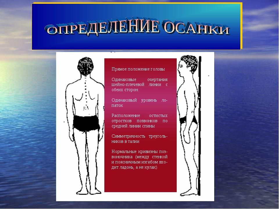 Прямое положение головы Одинаковые очертания шейно-плечевой линии с обеих сто...
