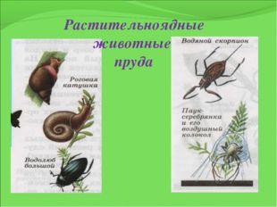Растительноядные животные пруда