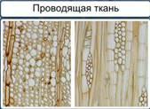 http://static.interneturok.cdnvideo.ru/content/konspekt_image/187527/a906bd10_8d00_0132_7225_12313c0dade2.jpg