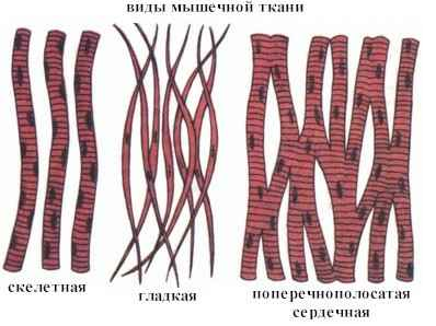 http://budtezdorovjem.ru/wp-content/uploads/2012/05/Vidi-michechnoy-tkani.png