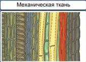 http://static.interneturok.cdnvideo.ru/content/konspekt_image/187526/a7324ae0_8d00_0132_7224_12313c0dade2.jpg