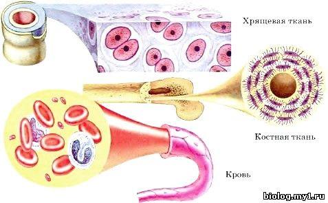 http://biolog.my1.ru/kIRILL/194/7.3.jpg