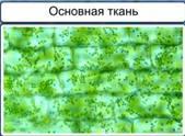 http://static.interneturok.cdnvideo.ru/content/konspekt_image/187528/aab97230_8d00_0132_7226_12313c0dade2.jpg
