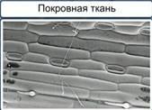 http://static.interneturok.cdnvideo.ru/content/konspekt_image/187525/a5833780_8d00_0132_7223_12313c0dade2.jpg