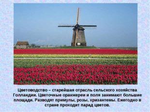 Цветоводство – старейшая отрасль сельского хозяйства Голландии. Цветочные ора