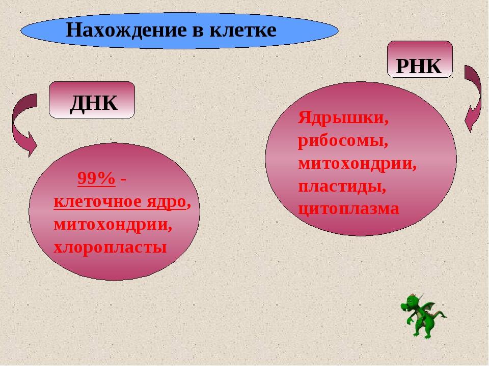 Нахождение в клетке ДНК РНК 99% - клеточное ядро, митохондрии, хлоропласты Яд...