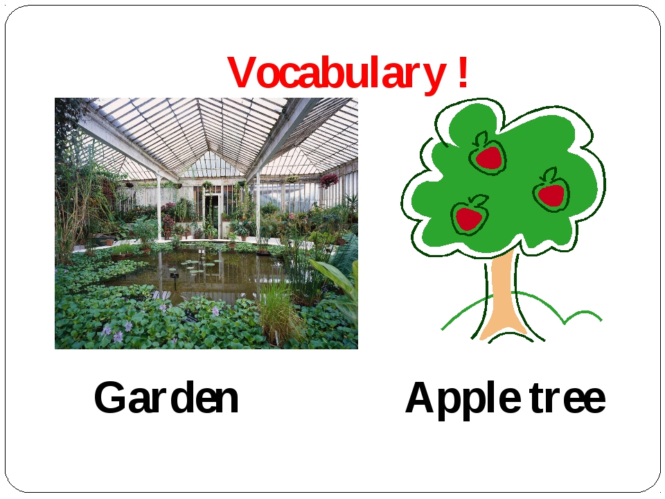 Vocabulary ! Garden Apple tree