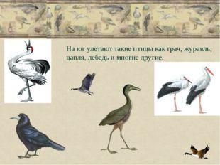 На юг улетают такие птицы как грач, журавль, цапля, лебедь и многие другие.