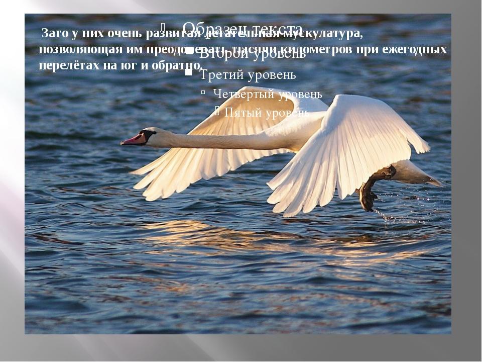 Зато у них очень развитая летательнаямускулатура, позволяющая им преодолев...