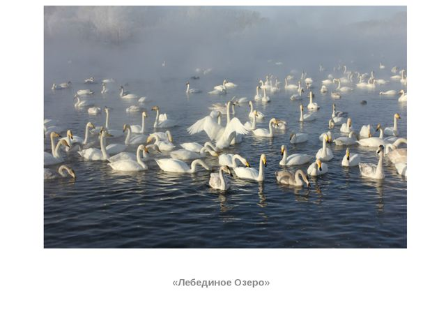 «Лебединое Озеро»