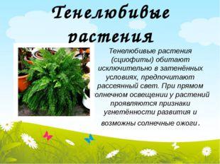 Тенелюбивые растения Тенелюбивые растения (сциофиты) обитают исключительно в