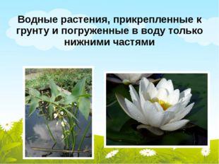 Водные растения, прикрепленные к грунту и погруженные в воду только нижними ч