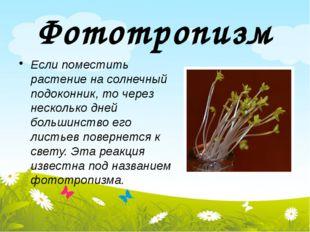 Фототропизм Если поместить растение на солнечный подоконник, то через несколь