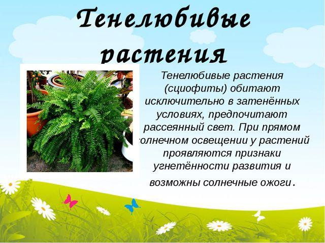 Тенелюбивые растения Тенелюбивые растения (сциофиты) обитают исключительно в...