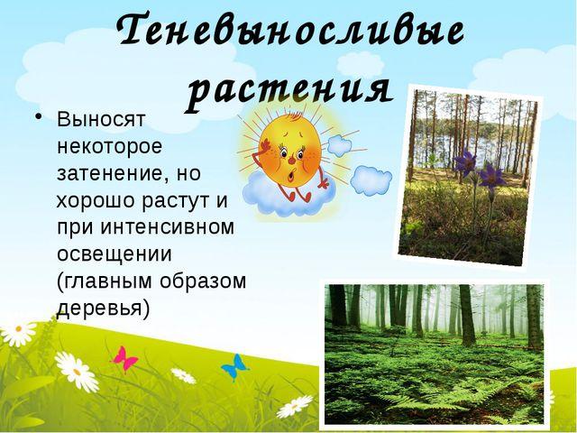 Теневыносливые растения Выносят некоторое затенение, но хорошо растут и при и...