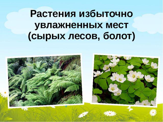 Растения избыточно увлажненных мест (сырых лесов, болот)