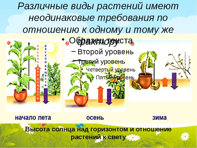 Различные виды растений имеют неодинаковые требования по отношению к одному и...