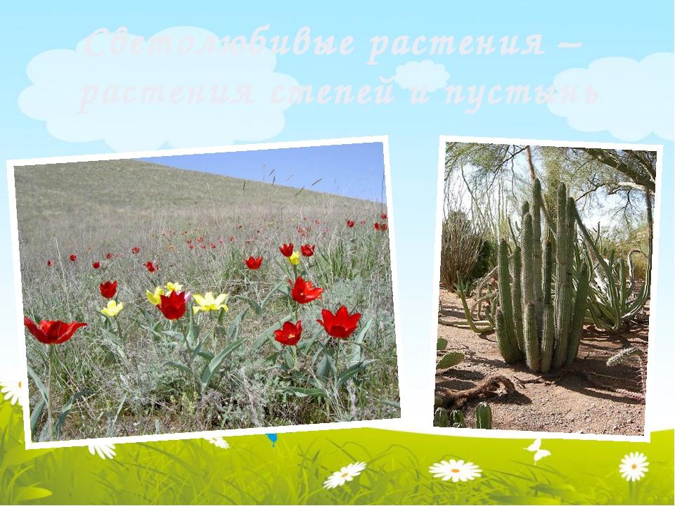 Светолюбивые растения – растения степей и пустынь