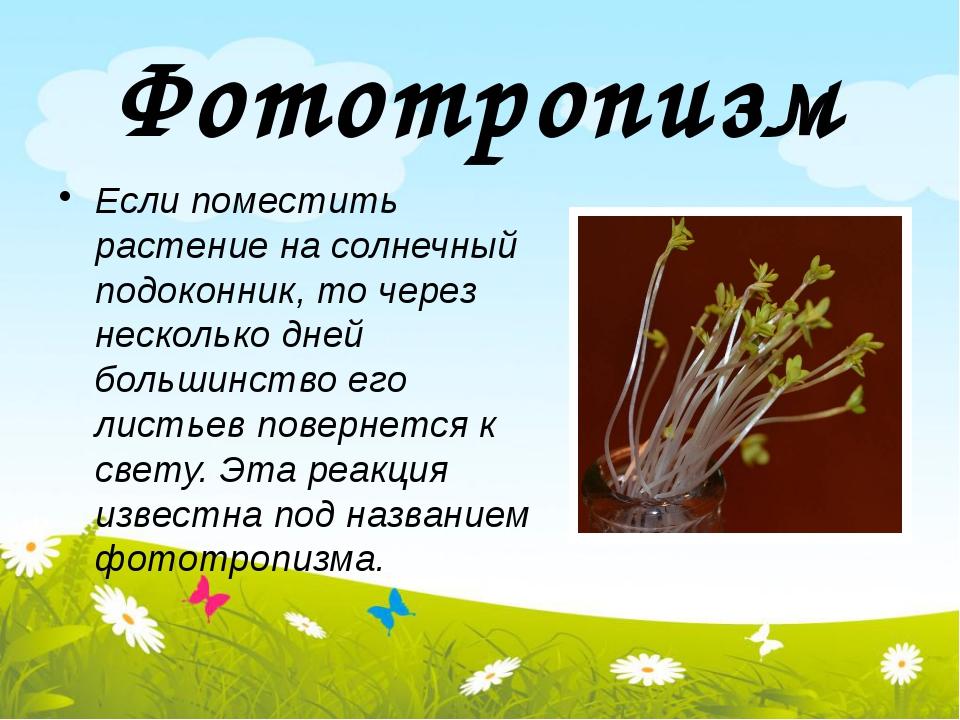 Фототропизм Если поместить растение на солнечный подоконник, то через несколь...
