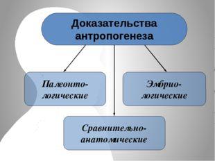 Доказательства антропогенеза Палеонто- логические Сравнительно- анатомические