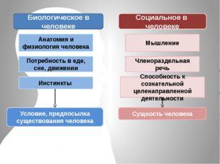 Биологическое в человеке Социальное в человеке Анатомия и физиология человека