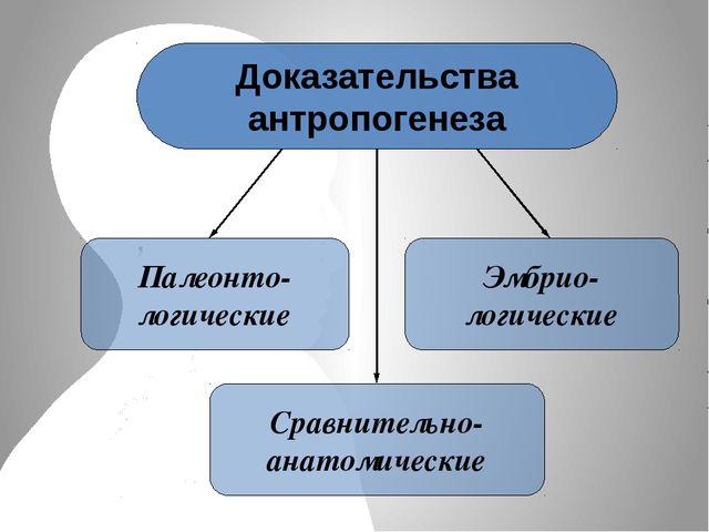 Доказательства антропогенеза Палеонто- логические Сравнительно- анатомические...