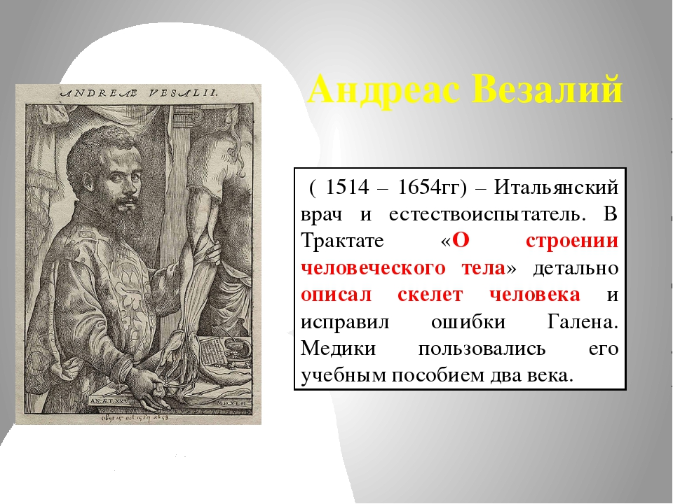 Андреас Везалий ( 1514 – 1654гг) – Итальянский врач и естествоиспытатель. В Т...