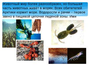 Животный мир более разнообразен, но большая часть животных живёт в морях. Все
