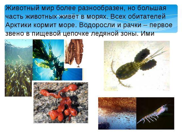 Животный мир более разнообразен, но большая часть животных живёт в морях. Все...