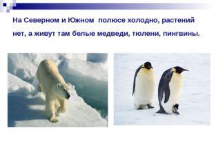 На Северном и Южном полюсе холодно, растений нет, а живут там белые медведи,