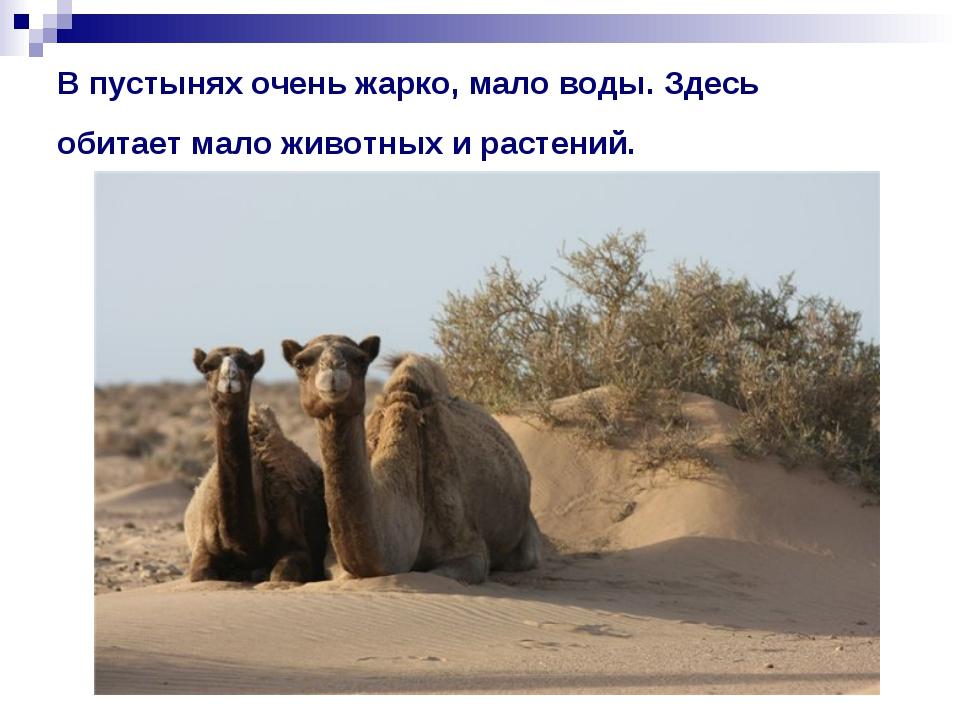 В пустынях очень жарко, мало воды. Здесь обитает мало животных и растений.
