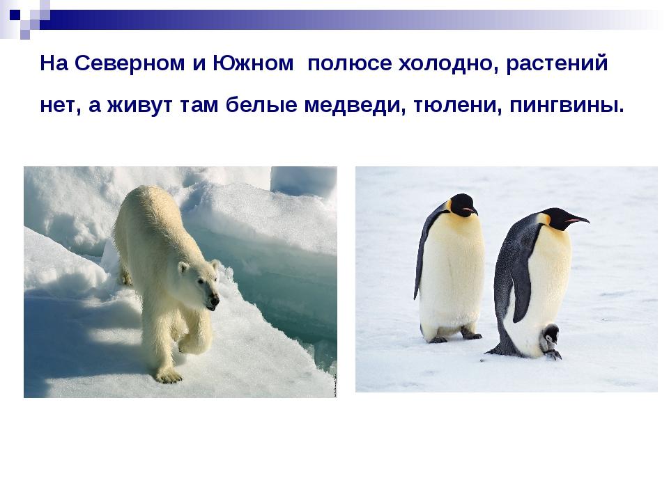 На Северном и Южном полюсе холодно, растений нет, а живут там белые медведи,...