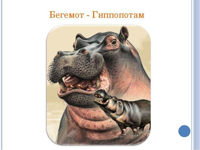 Бегемот - Гиппопотам
