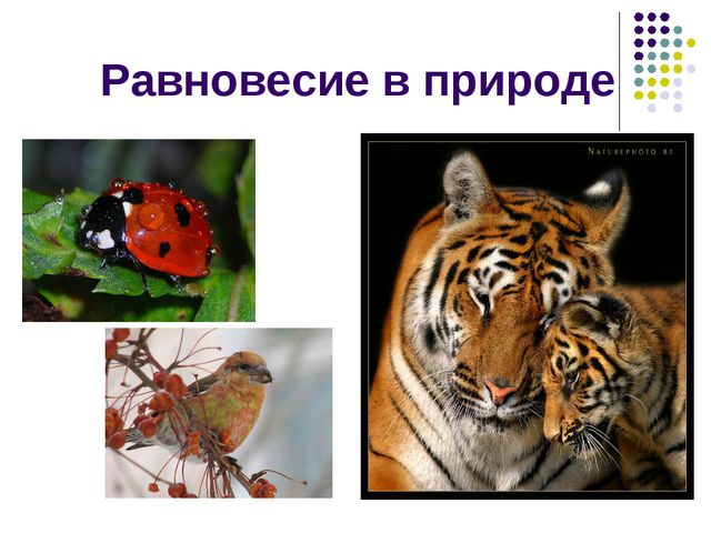 Равновесие в природе