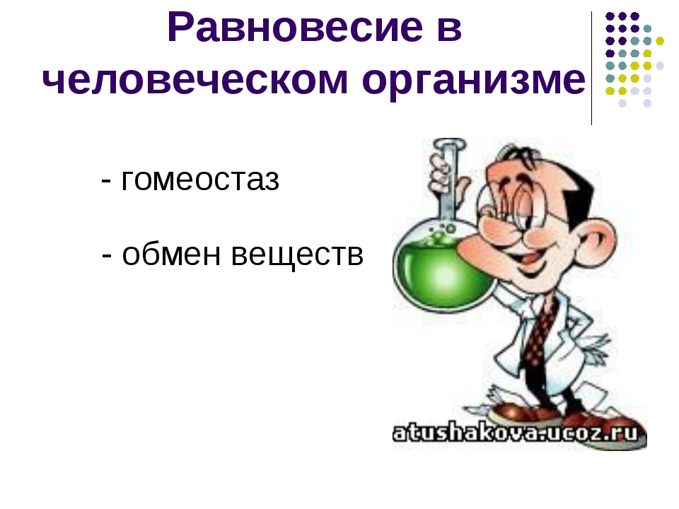 Равновесие в человеческом организме - гомеостаз - обмен веществ